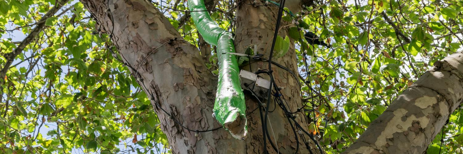 Mystery in the Trees - Python | Warrnambool Street Art
